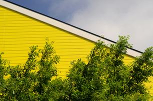黄色い壁の写真素材 [FYI00142534]