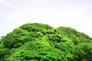 新緑の森の写真素材 [FYI00142547]