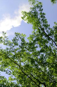新緑と青い空の写真素材 [FYI00142557]