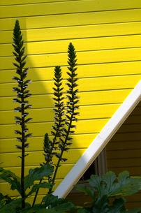黄色い壁の写真素材 [FYI00142559]