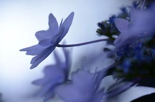 青い幻想の写真素材 [FYI00142584]