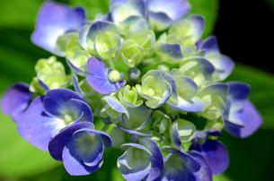 白と薄紫のコンビネーションの写真素材 [FYI00142615]