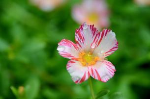 かわいらしい花模様の写真素材 [FYI00142667]