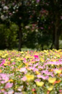 花畑の写真素材 [FYI00142699]