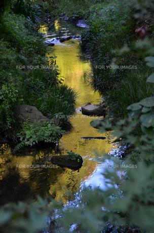 森の小川の素材 [FYI00142795]