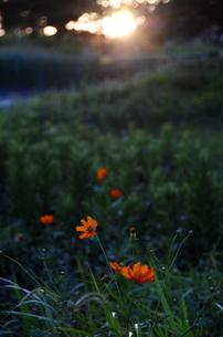 秋の夕暮れの写真素材 [FYI00142810]