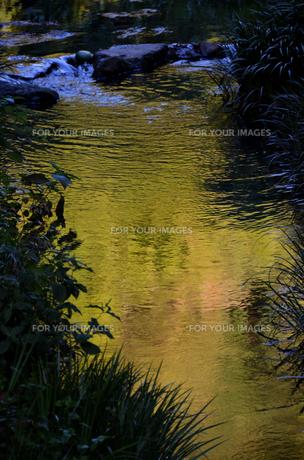 金色の水辺の素材 [FYI00142811]