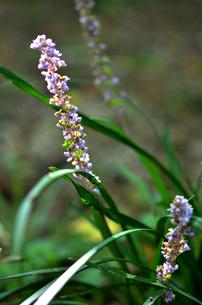 野の花の写真素材 [FYI00142829]