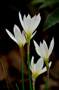 庭先の花の素材 [FYI00142836]
