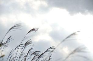 曇り日の写真素材 [FYI00142865]
