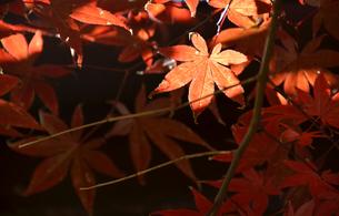 晩秋の日の素材 [FYI00142881]
