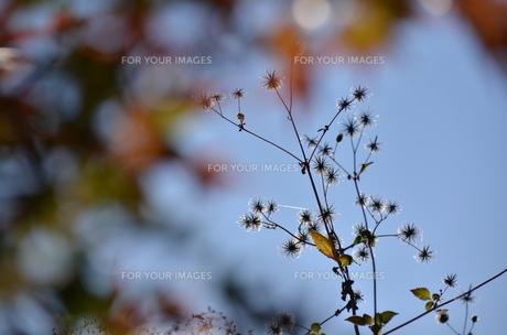 冬の日ざしの写真素材 [FYI00142901]