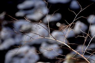 雪と枝のアートの素材 [FYI00142932]
