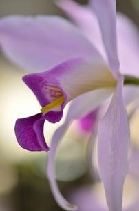 華やかな花の写真素材 [FYI00142934]