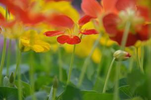 オレンジ色の花の写真素材 [FYI00143019]