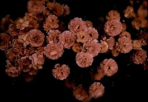 Flowerの写真素材 [FYI00143069]