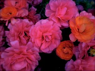 Flowerの写真素材 [FYI00143079]
