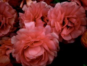 Flowerの写真素材 [FYI00143082]