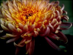 Flowerの写真素材 [FYI00143091]