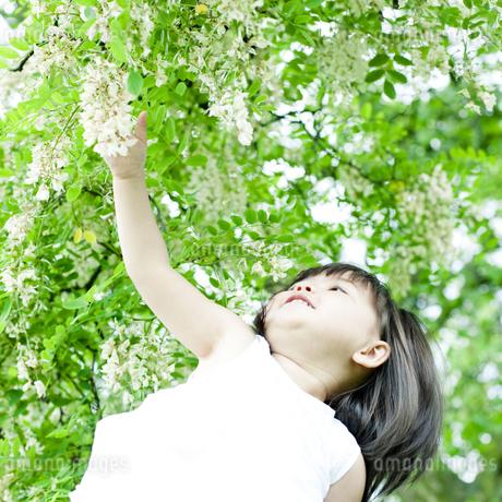 植物に手を伸ばすハーフの少女の写真素材 [FYI00143192]