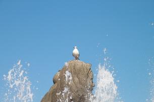 波しぶきの中の海鳥の写真素材 [FYI00143257]