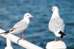 想いを寄せる海鳥の写真素材 [FYI00143269]