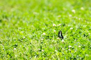 蝶の写真素材 [FYI00143292]