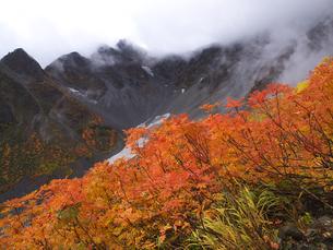ナナカマドの紅葉と前穂高岳の写真素材 [FYI00143428]