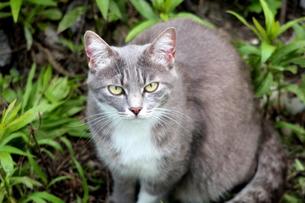野良猫の写真素材 [FYI00143474]