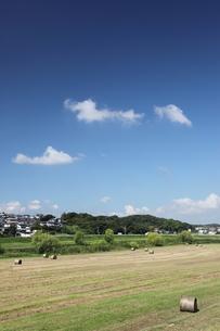 刈り取り後の牧草地と青空と雲の写真素材 [FYI00143639]