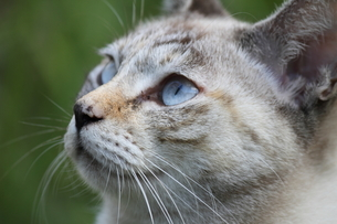 空を見上げるネコの写真素材 [FYI00143686]