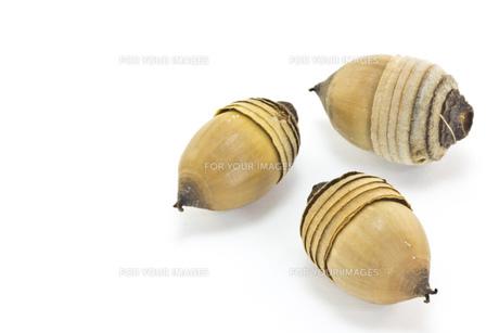 アラカシのドングリの素材 [FYI00143720]
