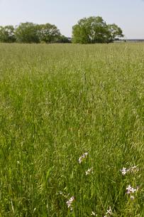 春の牧草地と林の写真素材 [FYI00143819]