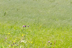初夏の草原の写真素材 [FYI00143843]