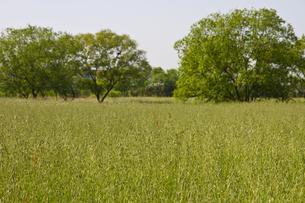 春の草原と森の写真素材 [FYI00143887]