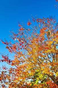 晩秋の広葉樹の素材 [FYI00143941]