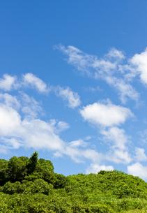 真夏の藪と空の写真素材 [FYI00144030]