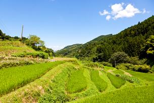夏の山間の棚田の風景の写真素材 [FYI00144074]