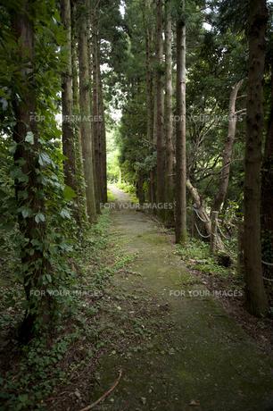 杉林の山道の写真素材 [FYI00144274]