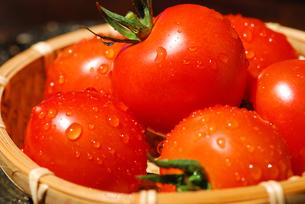 トマトの写真素材 [FYI00144435]