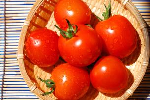 トマトの写真素材 [FYI00144436]