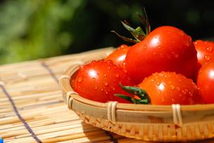 夏トマトの写真素材 [FYI00144437]