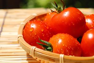トマトの写真素材 [FYI00144443]