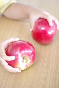 りんご狩りで採ったよの写真素材 [FYI00144847]