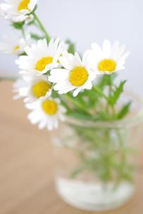 元気をくれる花の写真素材 [FYI00144854]