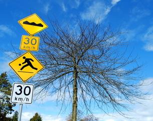 交通標識と木の写真素材 [FYI00144937]