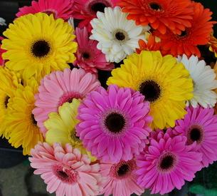 花屋の花の写真素材 [FYI00144946]