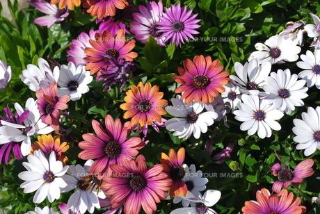 春の花の写真素材 [FYI00144953]