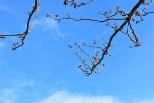 青空に伸びる新芽の写真素材 [FYI00144965]