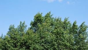 風になびく木々の写真素材 [FYI00145065]